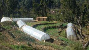 युवाहरुको वेमौसमी ताजा तरकारी खेति वार्ने